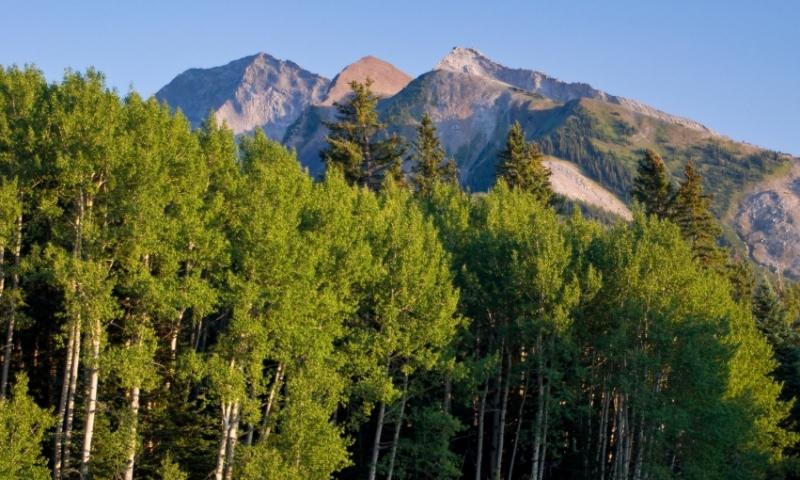 West Elk Wilderness Colorado