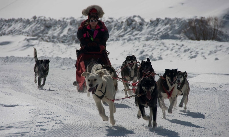 Dog Sled Tour in Crested Butte Colorado